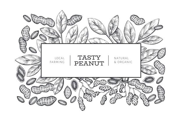 Dibujado a mano plantilla de rama y granos de maní. ilustración de alimentos orgánicos sobre fondo blanco. fondo de nuez vintage. cuadro botánico de estilo grabado.