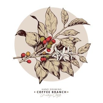 Dibujado a mano ramas de granos de café y flores en una ilustración de círculo beige