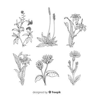 Dibujado a mano realista flores y hojas