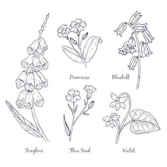 Dibujado a mano realista hierbas y flores silvestres