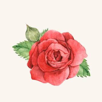 Dibujado a mano rosa roja aislada