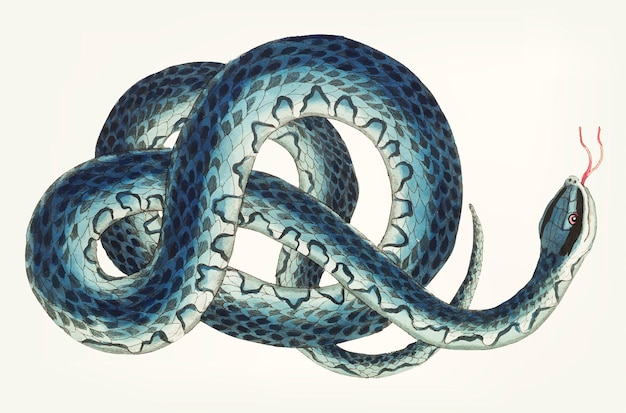Dibujado a mano serpiente wampum