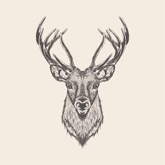 Dibujado a mano vector de ciervo ilustración