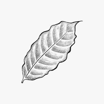 Dibujado a mano vector de hoja de café