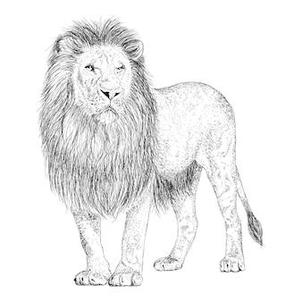 Dibujado a mano vector de ilustración de león