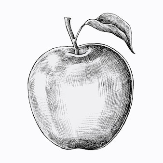 Dibujado a mano vector de manzana fresca