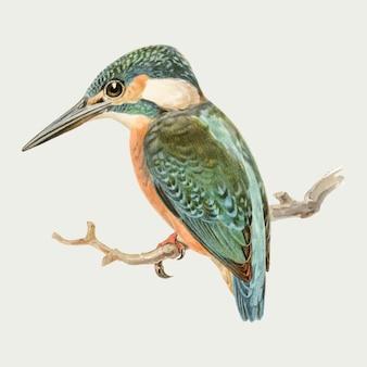 Dibujado a mano vector pájaro alcedo