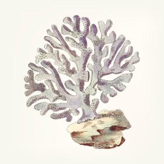 Dibujado a mano de violaceous millipore coral