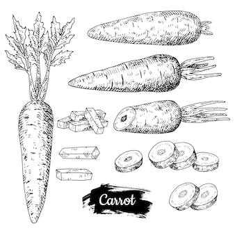Dibujado a mano zanahoria.