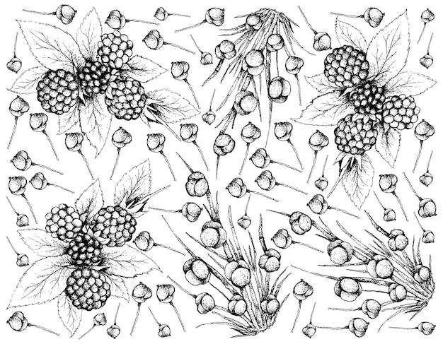 Dibujado a mano de zarzamoras y fondo de frutas de efedra distachya