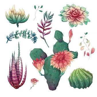 Dibujados a mano coloridos cactus y conjunto suculentos.