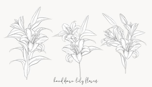 Dibujados a mano hermosos ramos de lirios