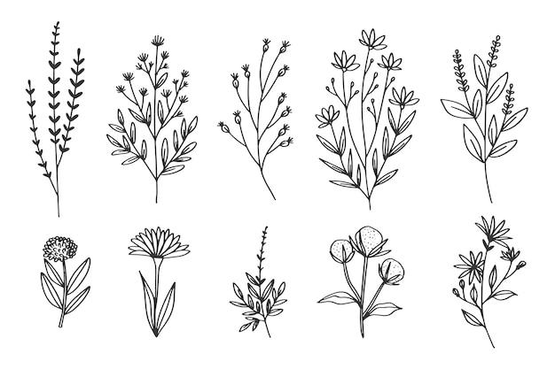 Dibujar a mano con colección de hierbas y flores