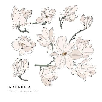 Dibujar a mano ilustración de flores de magnolia Vector Premium