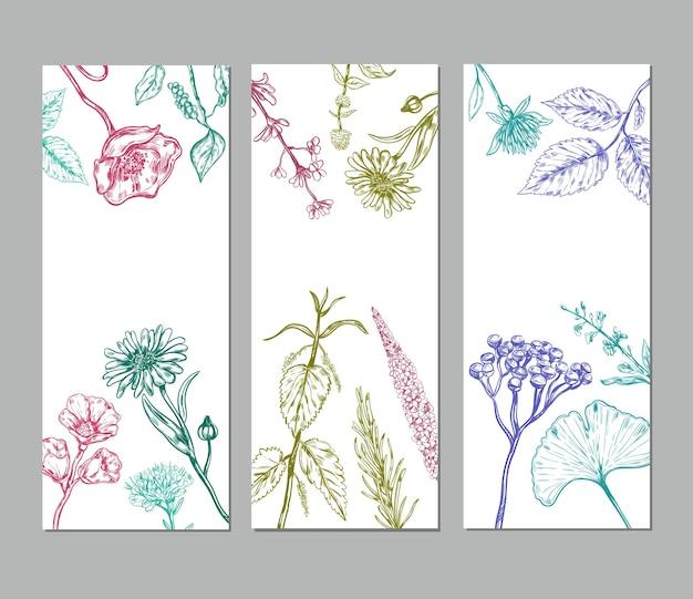 Dibuje pancartas verticales de hierbas con hierbas medicinales orgánicas valiosas para la salud humana