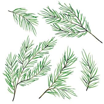 Dibujo de acuarela con ramas de abeto, árboles de navidad