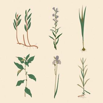 Dibujo artístico de hierbas y flores silvestres.