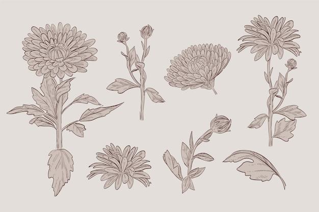 Dibujo de colección de flores de botánica en estilo vintage
