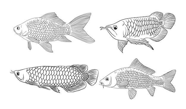 Dibujo para colorear de boceto de peces arowana y tilapia