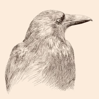 Dibujo cuervo negro.