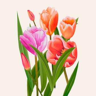 Dibujo de ilustración de flores de tulipán