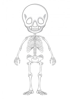 Dibujo esquemático de un esqueleto humano