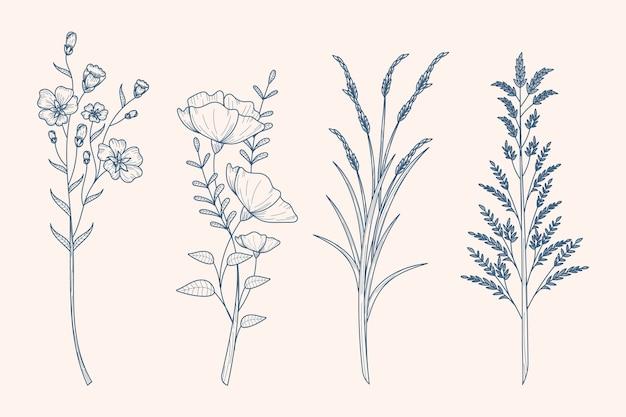 Dibujo de hierbas y flores silvestres en estilo vintage