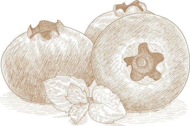 Dibujo, ilustración, de, arándano, frutas