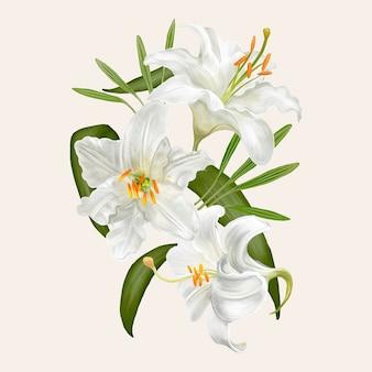 Dibujo de ilustración de flores de lirio