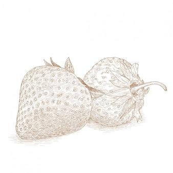 Dibujo, ilustración, de, fresa, frutas