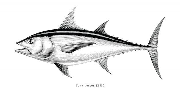 Dibujo a mano de atún vintage grabado ilustración