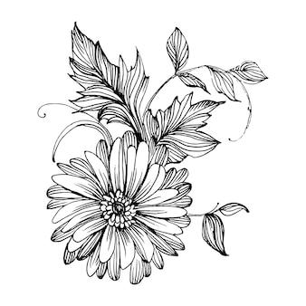 Dibujo a mano de crisantemo. floral en estilo de arte de línea.