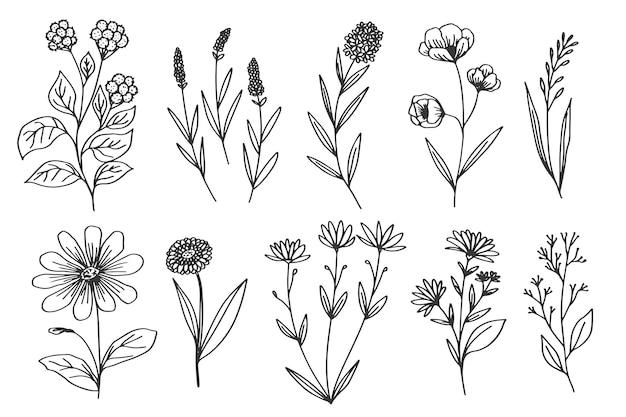 Dibujo monocromo con flores y hierbas