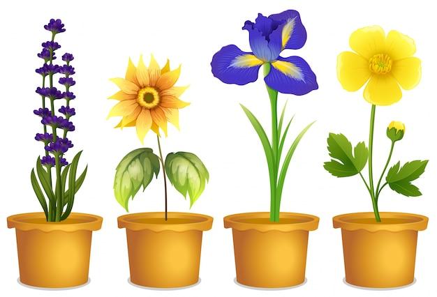 Dibujo planta clipart floración camino