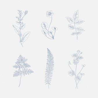 Dibujo realista de hierbas y flores silvestres.