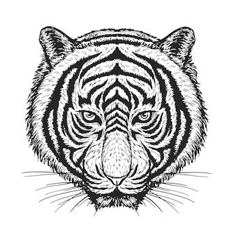 Dibujo vectorial de tigre en blanco.