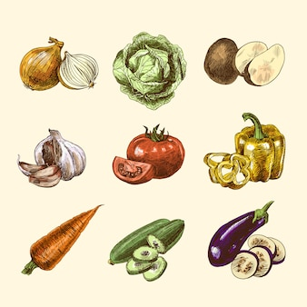 Dibujo de verduras set color.