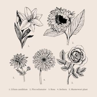Dibujo vintage con colección de flores de botánica