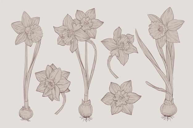 Dibujo vintage realista de la colección de flores de botánica