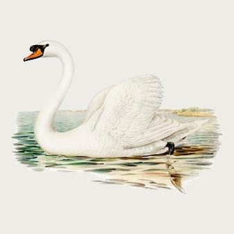 Dibujo vintage de vector de pájaro cisne