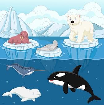 Dibujos animados de animales del ártico salvaje en el polo norte