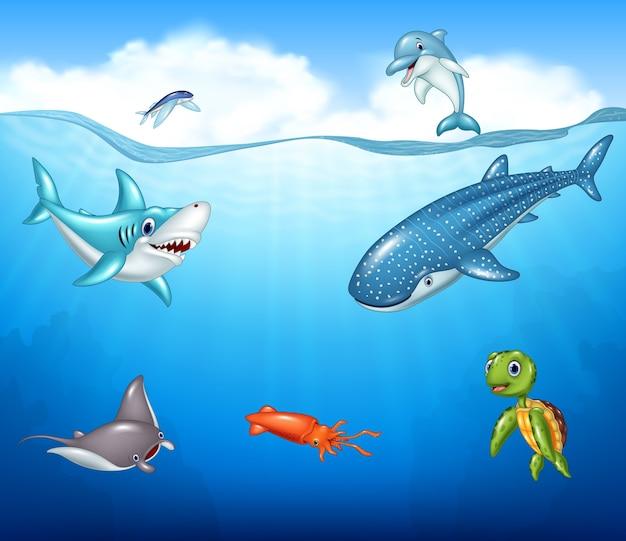 Dibujos animados de animales marinos