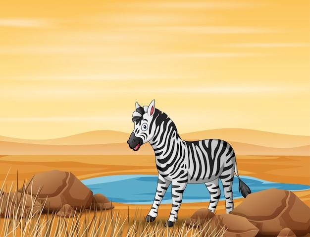 Dibujos animados de una cebra que vive en tierra firme