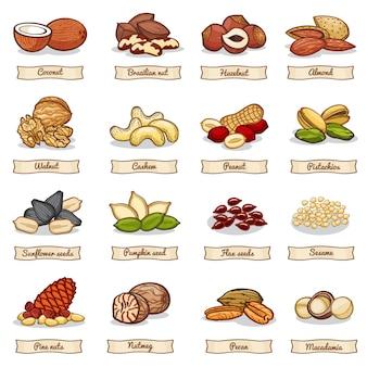 Dibujos animados de color de tuerca y semillas de granos. colección de vectores
