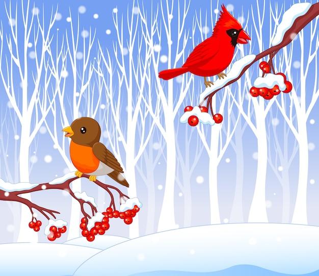 Dibujos animados divertidos pájaro cardenal y petirrojo