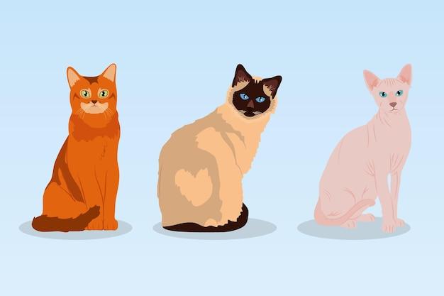 Dibujos animados de gatos y gatos sphynx