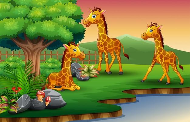 Dibujos animados de jirafa están disfrutando de la naturaleza junto al río.