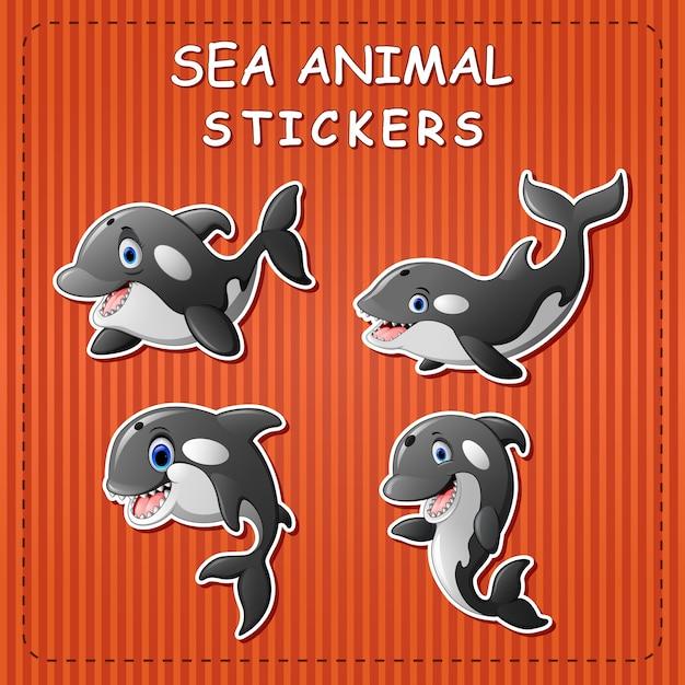 Dibujos animados lindo orca ballena en etiqueta