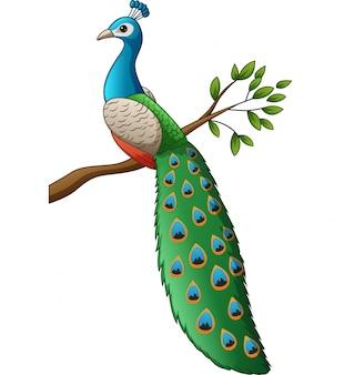 Dibujos animados lindo pavo real en una rama