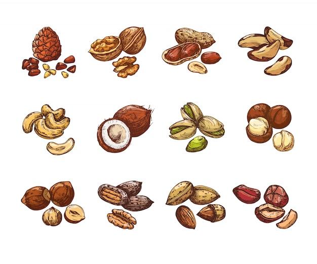 Dibujos animados de nueces y semillas. avellana y coco
